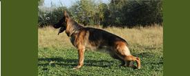 Деление собак по размеру
