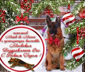 Племенной питомник немецкой овчарки в Одинцово, купить щенка немецкой овчарки в Одинцово - новый год3