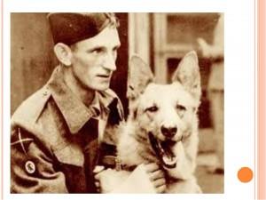 Племенной питомник немецкой овчарки в Одинцово, купить щенка немецкой овчарки в Одинцово -хан