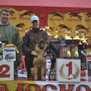 Московия, племенной питомник немецких овчарок, купить щенка немецкой овчарки в Одинцово, немецкая овчарка в Одинцово