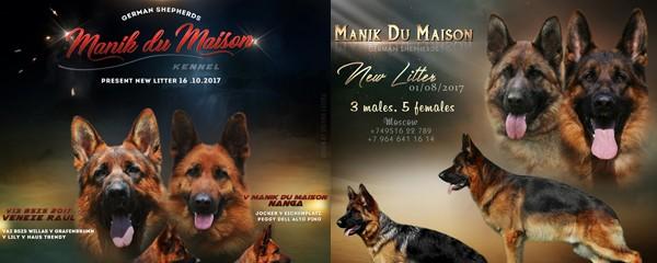 Купить щенков немецких овчаров в Manik Du Maison