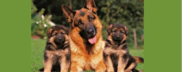 Рацион питания для взрослой собаки