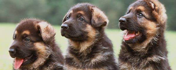 Выкармливание щенков с первых дней