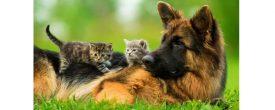 Кот и собака под одной крышей. Как научить животных дружить?