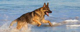 Как приучить собаку не бояться воды
