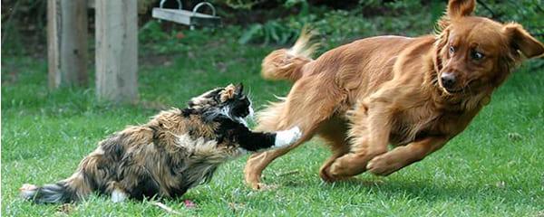 Почему враждуют кошки и собаки