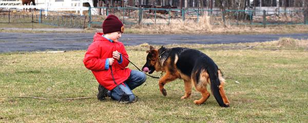 Отношение немецкой овчарки к детям